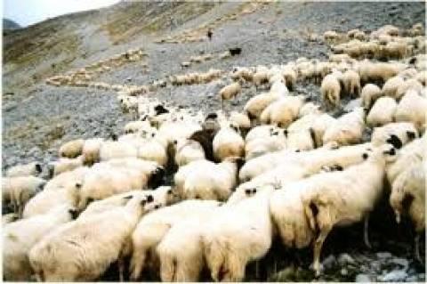 Ενημέρωση των κτηνοτρόφων στο Αγρίνιο για τον καταρροϊκό πυρετό