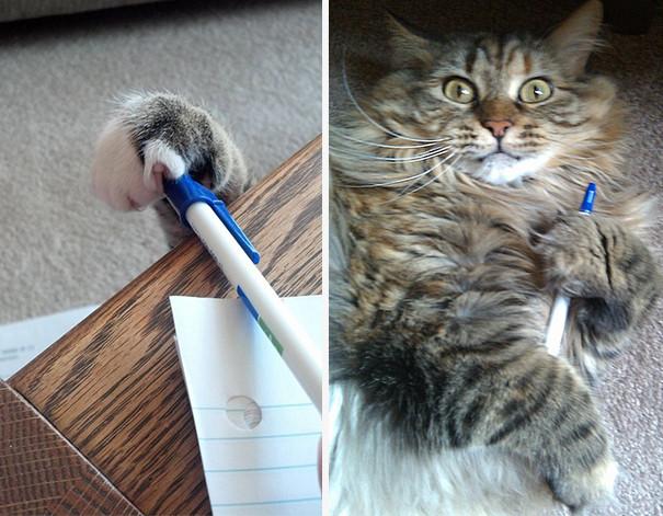 Όταν οι γάτες «σουφρώνουν»…