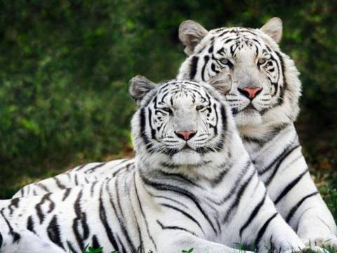 Ο άνθρωπος εξαφάνισε τα μισά άγρια ζώα του πλανήτη