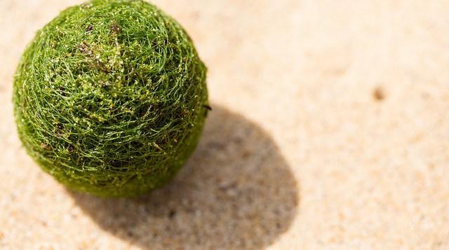 Εξωγήινα «αυγά» ξεβράστηκαν σε παραλία του Σίδνεϊ! (vid+pics)