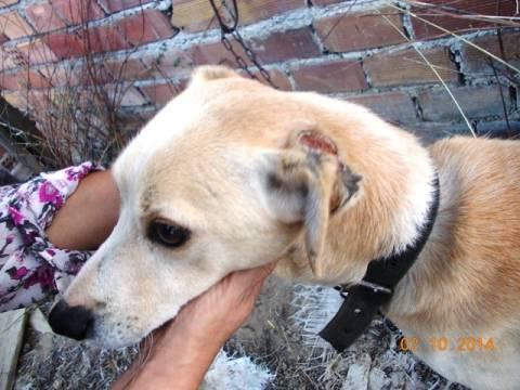 Κρήτη: Νέα κτηνωδία σε σκύλους – Αποκάλυψη που σοκάρει (pics)