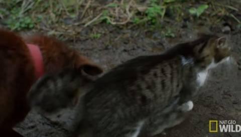 Γάτα καθοδηγεί τυφλό σκύλο με τη βοήθεια της ουράς της (βίντεο)