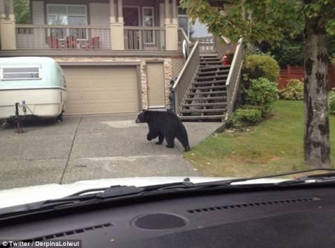 Δεν παρέδωσε την αλληλογραφία λόγω... αρκούδας! (pic)
