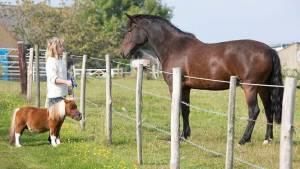 Το άλογο μινιατούρα που νομίζει πως είναι σκύλος (Video)