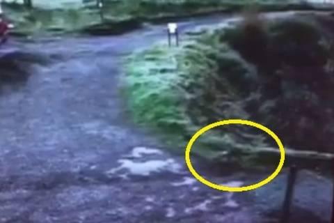 Βρετανία: Μυστηριώδες πλάσμα κατασπάραξε κοτόπουλο! (vid+pics)