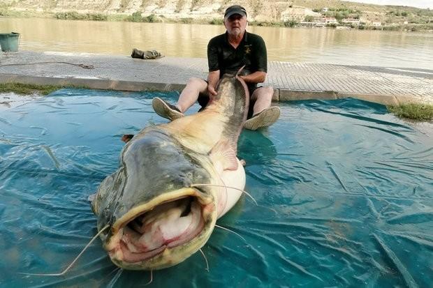 Ψαριά για... ρεκόρ! Πιάστηκε το μεγαλύτερο αλμπίνο γατόψαρο