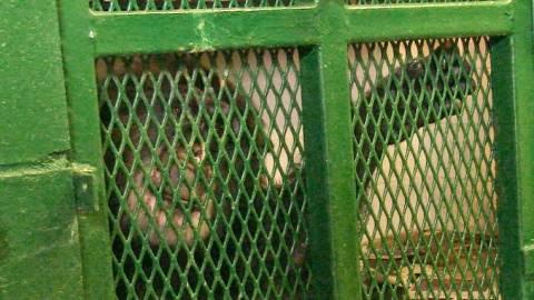 Δικαστήριο θα ορίσει αν οι πίθηκοι έχουν ανθρώπινα δικαιώματα