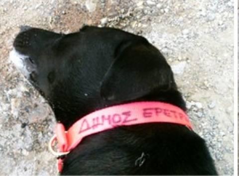 Νέο κρούσμα δηλητηρίασης σκύλου στην Εύβοια