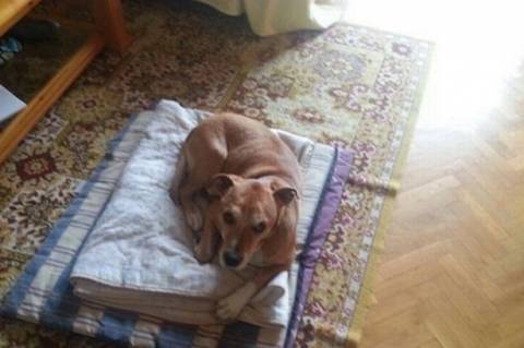 «Αχρείαστη η ευθανασία του σκύλου», λέει ο πλέον ειδικός