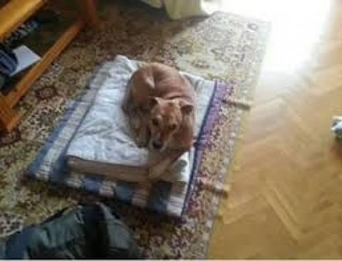 Έμπολα: Επεισόδια για τη θανάτωση του σκύλου της νοσοκόμας (pics)