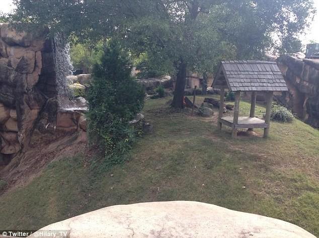 ΗΠΑ: 3χρονος κατασπαράχτηκε από ιαγουάρους σε ζωολογικό κήπο! (vid+pics)