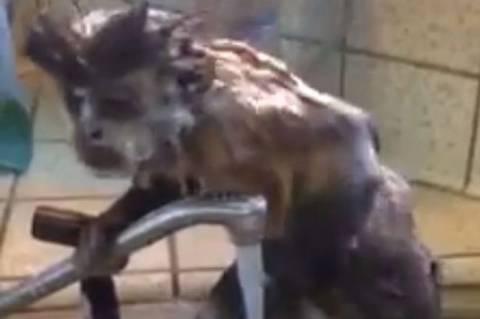 Καλιφόρνια: Έχετε αναρωτηθεί πώς κάνουν μπάνιο οι μαϊμούδες; (vid)