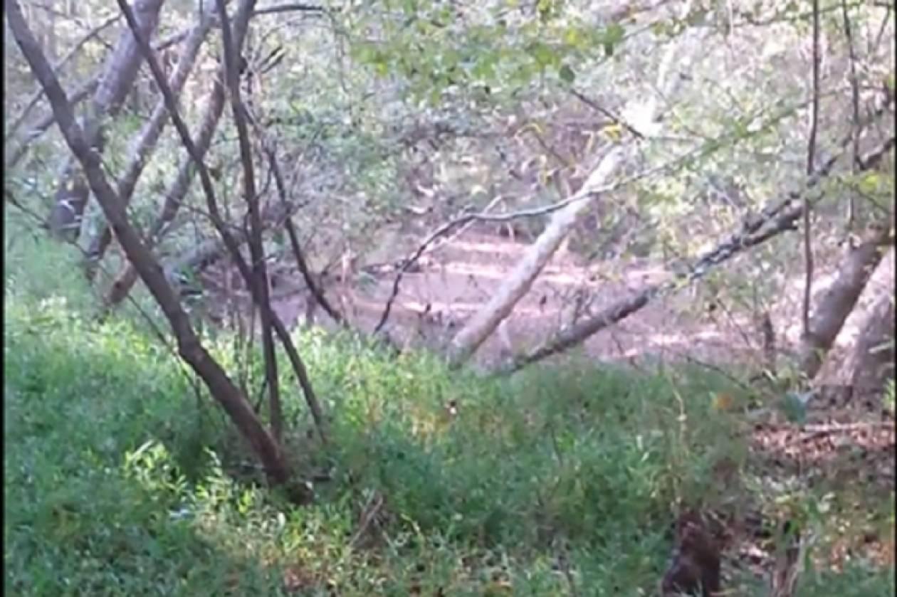 ΗΠΑ: Άνδρας περιφερόταν γυμνός στο δάσος για 4 ημέρες! (vid)