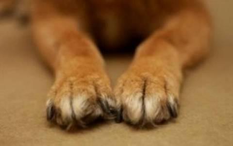 Πάτρα: Αθώος ο κυνηγός που εκτέλεσε σκύλο!