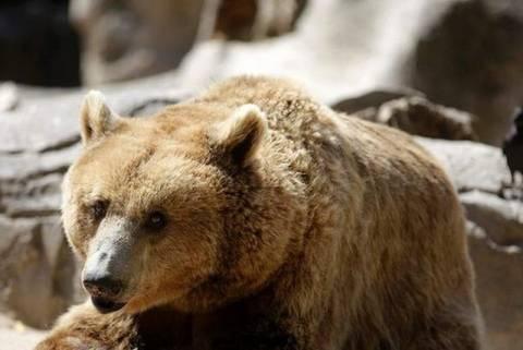 Κίνα: Αρκούδα ξερίζωσε το χέρι 9χρονου σε ζωολογικό κήπο!