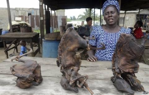 Έμπολα - BBC: Το κρέας άγριων ζώων πίσω από το ξέσπασμα του ιού;