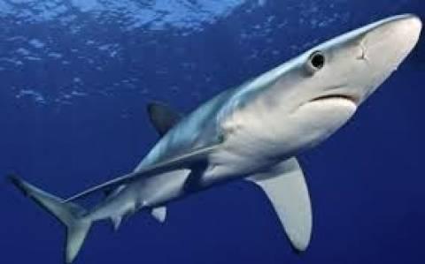 Απίθανη φωτογραφία: Καρχαρίας... τρώει σύννεφο