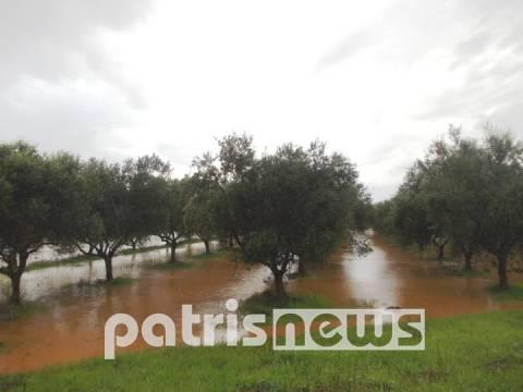 Αμαλιάδα: «Πνίγηκαν» χωράφια και καλλιέργειες