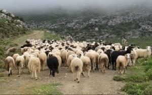 Κατατέθηκε τροπολογία που αφορά απλήρωτους κτηνοτρόφους