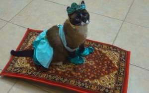 Γάτα… πριγκίπισσα του Αλαντίν πάνω σε μαγικό χαλί!