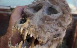 Αγρότης πιστεύει ότι ανακάλυψε κρανίο... λυκανθρώπου