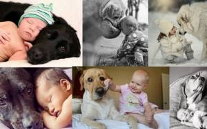 17 μεγάλα σκυλιά γίνονται «φύλακες-άγγελοι» για τα μωράκια