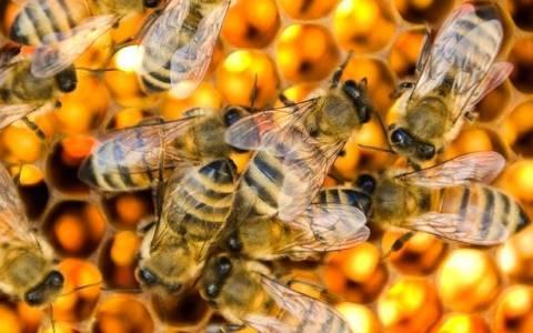 Καναδάς: Νεκρές 37 εκατομμύρια μέλισσες! (video)