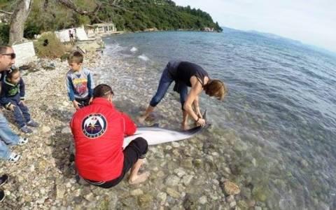 Νεκρό δελφίνι στην παραλία του Ύψου
