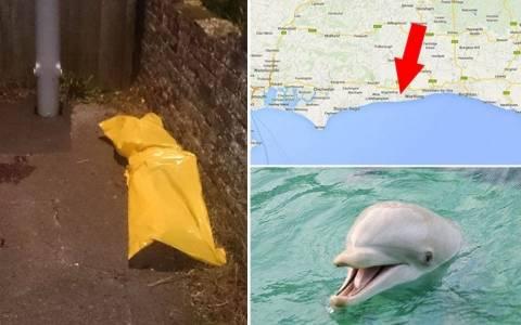 Νεκρό δελφίνι σε σοκάκι από υπερβολική δόση… σεξ!
