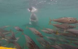 Ανθρωποφάγος καρχαρίας επιτίθεται σε τουρίστες!