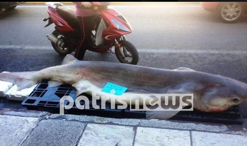 Акула длиной 3,2 метра – улов рыбака в Пиргосе