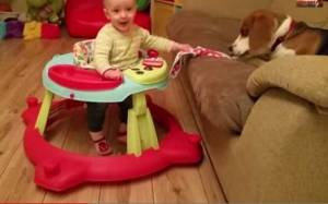 Τι γίνεται όταν ο σκύλος κλέψει την σαλιάρα του μωρού;