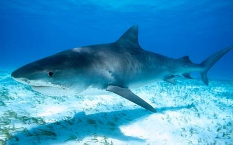 Φιλιππίνες: Βρήκαν ανθρώπινο κεφάλι μέσα σε κοιλιά καρχαρία