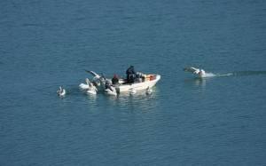 Συλλήψεις για παράνομη αλιεία στη Φλώρινα