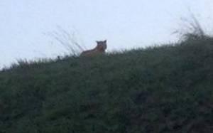 Παρίσι: Συνεχίζονται οι έρευνες για τον εντοπισμό της τίγρης