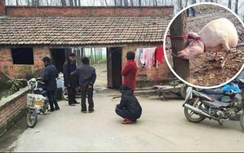 Κίνα: Γουρούνα έφαγε ζωντανό 2χρονο αγοράκι!