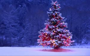 Χριστούγεννα: 151.000 δέντρα πρόκειται να υλοτομηθούν