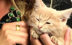 Το γατάκι που σώθηκε από βέβαιο θάνατο (vid)