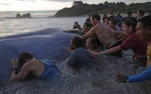 Φάλαινα καταδικασμένη στον θάνατο (photos)