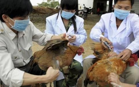 Πάτησε… Ευρώπη ο θανατηφόρος ιός της γρίπης των πτηνών!