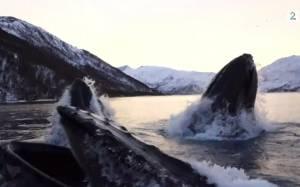 Έξι φάλαινες περικύκλωσαν το σκάφος τους!