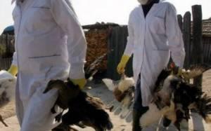 Τρόμος και στη Βρετανία από τη γρίπη των πτηνών