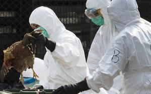 Λήξη συναγερμού για τη γρίπη των πτηνών στη Βρετανία