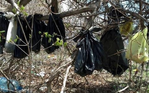 Νέα Υόρκη: Κρέμασε σε δέντρο 25 νεκρές γάτες