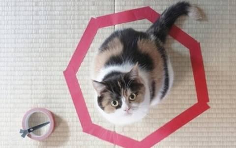 Πώς μπορείτε να... παγιδέψετε μια γάτα!