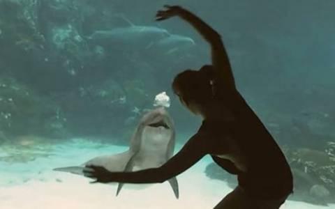 Δελφίνι ξεκαρδίζεται στα γέλια από ακροβατικά!