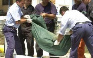 Σκύλος περιφερόταν με τμήμα σώματος από το πτώμα 80χρονου