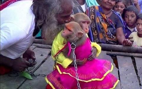 Ινδία: Άντρας πάντρεψε δύο πιθήκους (video)