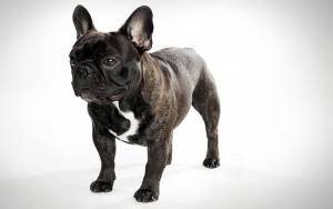 Ένας σκύλος που κάνει σαν μηχανή diesel!