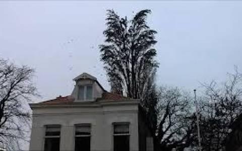 Είναι ένα απλό δέντρο. Ή μήπως όχι; (βίντεο)